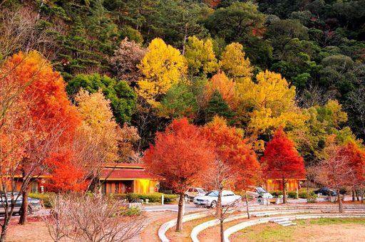 Mùa thu Đài Loan đẹp đến nao lòng